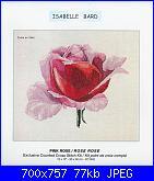 Isabelle Bard- Fiori-pink-rose-foto-jpg