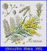 Schemi mimose-dfea-flower-shadow-mimoza-jpg