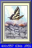 Sue Coleman - CS 318 - Butterfly Reflection-sue-coleman-cs-318-butterfly-reflection-jpg