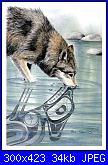Sue Coleman - CS 361 - Wolf-sue-coleman-cs-361-wolf-jpg