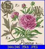 """Les Brodeuses Parisiennes - Veronique Enginger - Etude aux roses """"Duc De Wellington""""-la-pivoine-etudes-de-botaniqe-veronique-enginger-de-fil-en-aiquilles-28-2009-jpg"""
