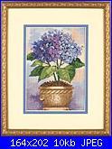 Dimensions 6959 - Hydrangea in Bloom-dimensions-6959-hydrangea-bloom-jpg