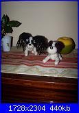 Amigurumi Cuccioli all'uncinetto-100_7456-jpg