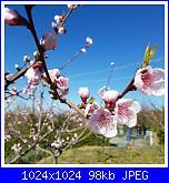 #iostoacasa-2020-03-11_15-17-33-jpg