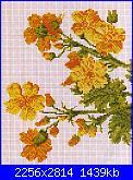 cerco schemi di ciclamini e ranucoli-img012-jpg