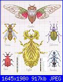 insetti-17c0475ba4f6-jpg
