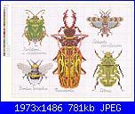 insetti-f702d8a38f11-jpg
