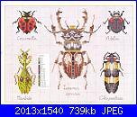 insetti-i-2-jpg