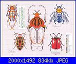 insetti-i-jpg