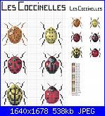 insetti-11-jpg