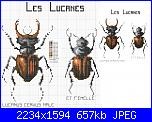 insetti-2-jpg