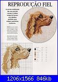 setter irlandese-cachorros40-jpg