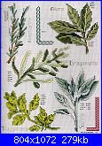 Piante/erbe aromatiche.-29856661-jpg