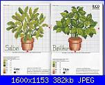 Piante/erbe aromatiche.-rico-n%BA35-03-jpg