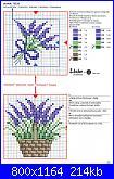 Piante/erbe aromatiche.-rico-n%BA57-16-jpg