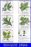 Piante/erbe aromatiche.-rico-n%BA40-31-jpg