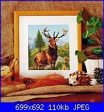 Cerco schema cervo-cervo-jpg