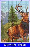 Cerco schema cervo-cervo1-jpg