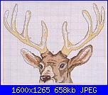 Cerco schema cervo-038_animal_shema_1-jpg