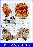 cane spitz (volpino rosso)-025-jpg