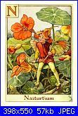 cerco piccolo elfo-nasturtium_flower_fairy-jpg