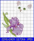 Cerco legenda colori iris-iris-con-gatto-jpg