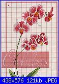 Cerco orchidea più nitida-1%252520%2525286%252529-jpg