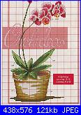 Cerco orchidea più nitida-1%252520%2525287%252529-jpg