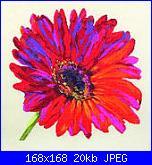 Cerco schemi Anchor Maia serie Floral-red-ruffles-anc5678000-01152-jpg