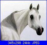 cavallo-garda_cavallo-jpg
