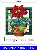Richiesta Stella di Natale-poinsettia-jpg