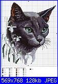 cerco coperta con i gatti-am_59235_903534_891264-jpg