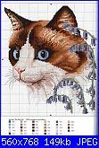 cerco coperta con i gatti-am_59235_1000728_125665-jpg