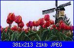 tulipani-gok474-jpg