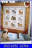 cani e gatti-immagine-004-jpg
