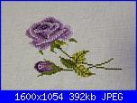 rose viola-img_3633-jpg