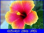 quadro stile hawaiano-ibisco_o4-jpg