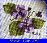 cerco queste violette-violette-2-0011-jpg