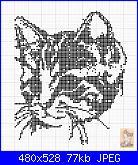 cerco musetto di gatto monocolore...-1c4b212d4bc4d4a3e3c12db356dafa2d-jpg
