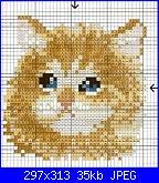 cerco musetto di gatto monocolore...-654769360986b8fb9ee5168a829276f0-jpg