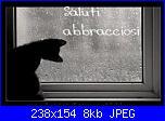 Foto gatto in schema-saluti-2-jpg