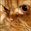 Foto gatto in schema-gatto-jpg