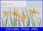 Cerco schema narcisi-img_20130601_0021-jpg