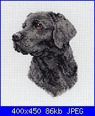 schema labrador-a8d1dec59fa78344e4aa4cf0239f35eb-jpg