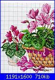 Schema ciclamino-fiori-1-jpg