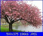 Schema alberi di ciliegio o sakura-alberi-di-ciliegio_o2-jpg