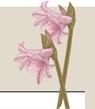 fiore-banner-jpg