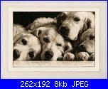 Schema cani golden retrievers-fb_img_1464854437423-jpg
