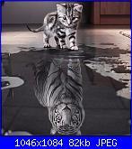 cercasi schema cat reflection tiger-schema-gatto-da-cercare-jpg