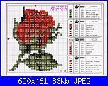 Rose Rosse-rosa_1-jpg